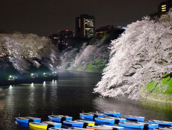 千鳥ヶ淵の桜2016