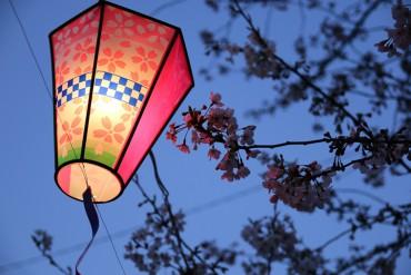 大岡川,夜桜