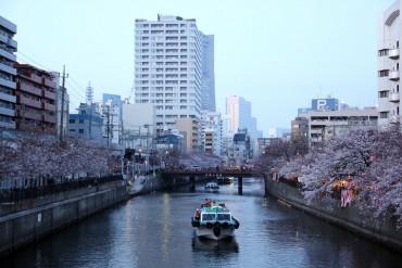 大岡川,お花見
